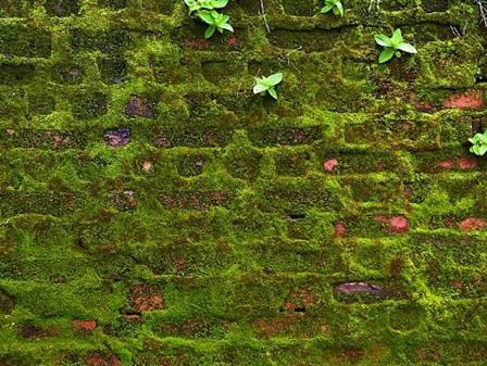 Bahçe duvarı taş duvar - Yosun efekti duvar
